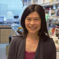Suzie H. Pun, Ph.D.